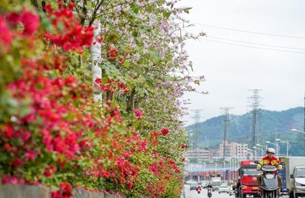 鲜花扮靓道路