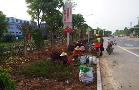 绿化美化工业大道