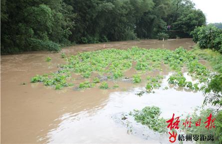 强降雨致农田受淹