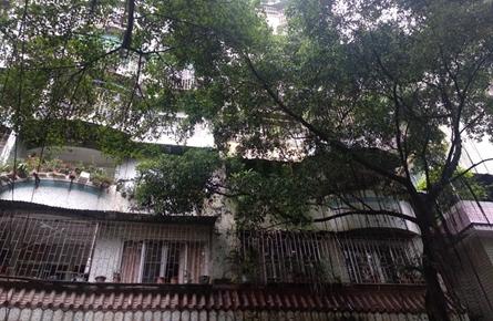 华光巷行道树繁茂影响房屋采光
