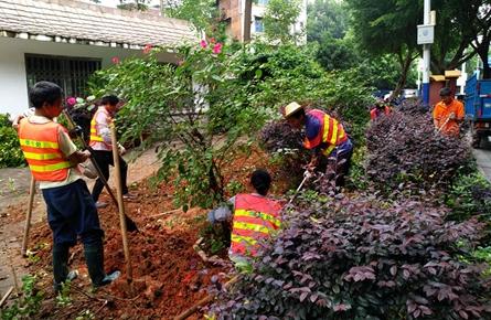 改造小游园绿化