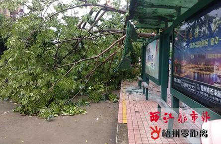 行道树倒伏砸向公交站台 数名市民受伤