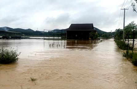 万秀区夏郢镇11个村水田受淹