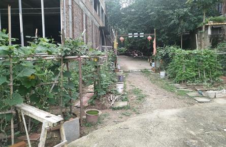 小区内围地种菜污水四溢