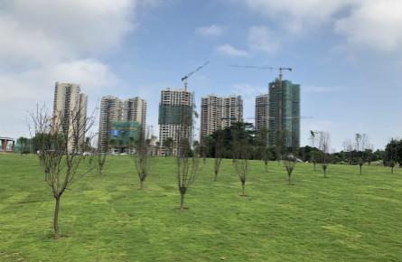 苍海公园桃花岛增种桃花树