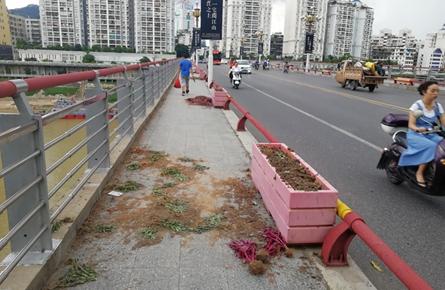 桂江一桥绿化花槽遭破坏