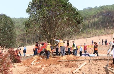 植树美化公路