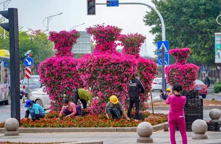 市区道路新增花瓶造型宝巾花