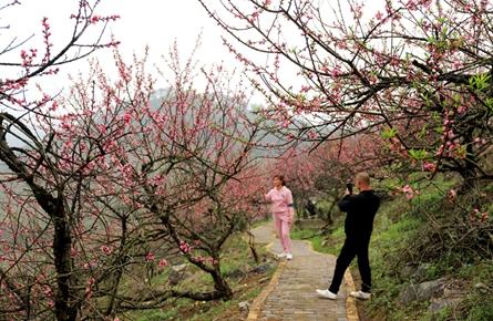 桃花盛开春意浓