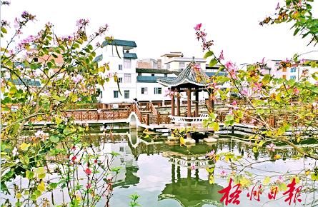 花团锦簇乡村美