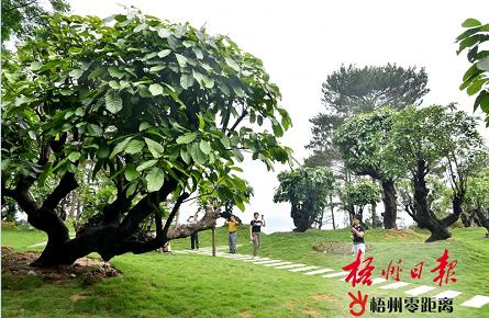 市民参观市树园