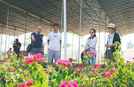 梧州市已拥有宝巾花品种约180个