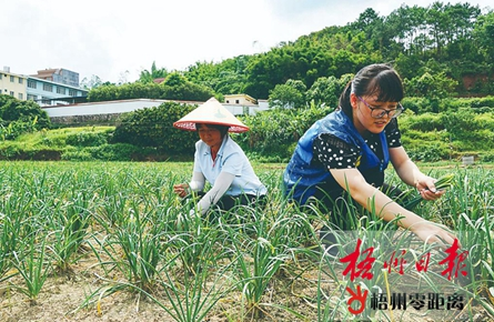 扎根基层 情倾农家 | 梧州市驻村第一书记掠影