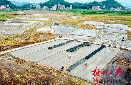 全市进入早稻收割高峰期