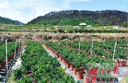 种植花卉助增收