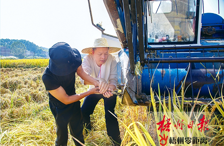 晚稻收割将持续至11月中下旬
