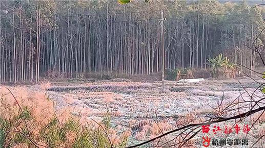 霜冻天气农作物受损
