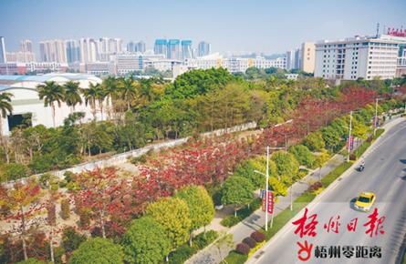 绿树红花景观美