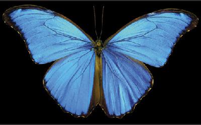 梧州零距离问政网_美刊评出八大最美蝴蝶 枯叶蝶如同逼真落叶