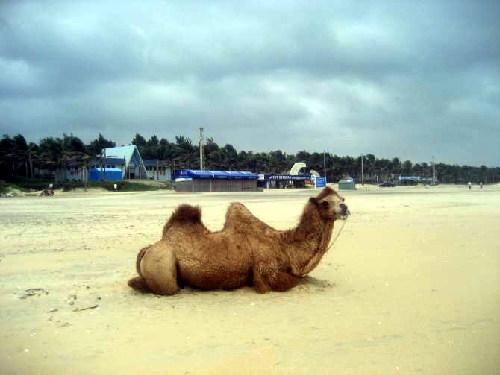 东海岛旅游度假区是一个环境优雅,风景秀丽的海滨度 假区,现建有度假