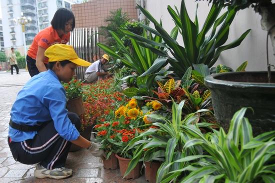市内摆放鲜花盆景图片
