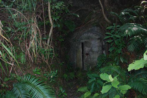 深入丛林探险 荷包岛上还有一个很好玩的项目--丛林