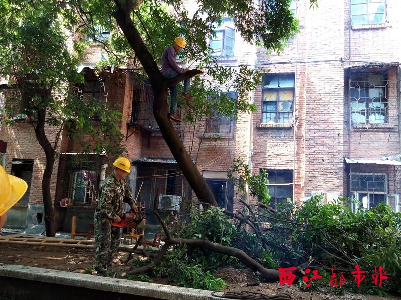 作人员在新兴社区修剪树枝
