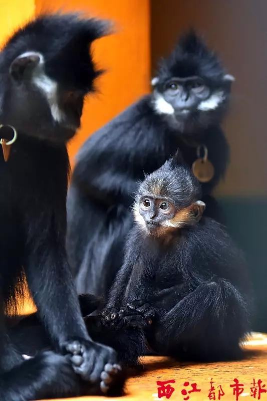 梧州黑叶猴珍稀动物繁殖中心