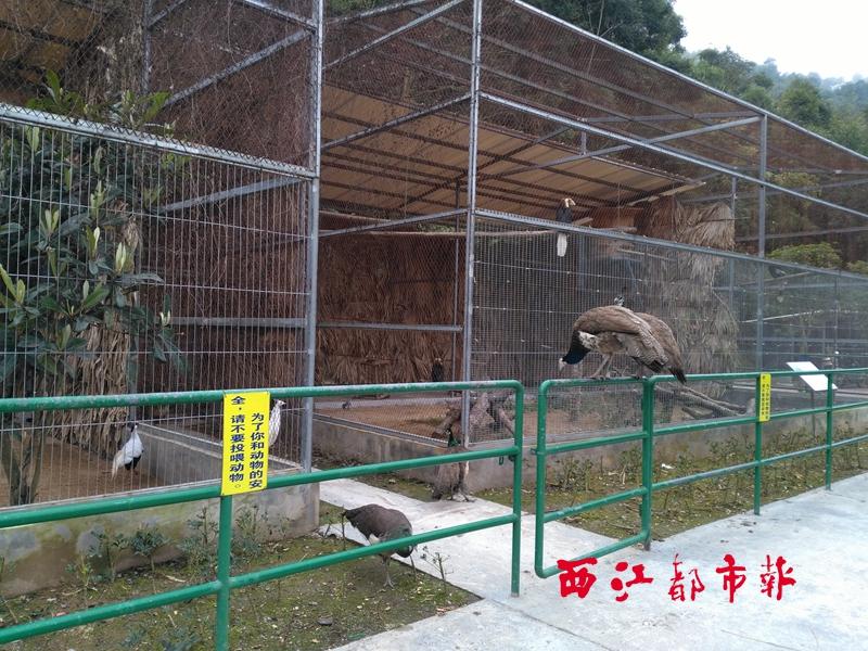 2月6日,在梧州市动物园内,记者看到,几乎每一个动物笼舍和观众的围栏