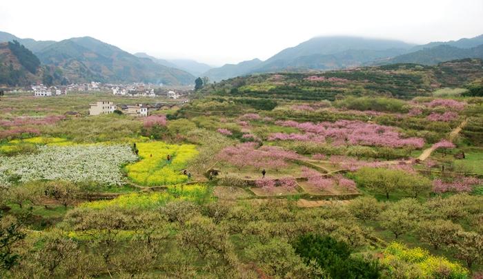 【花海游】鲜花盛开的村庄