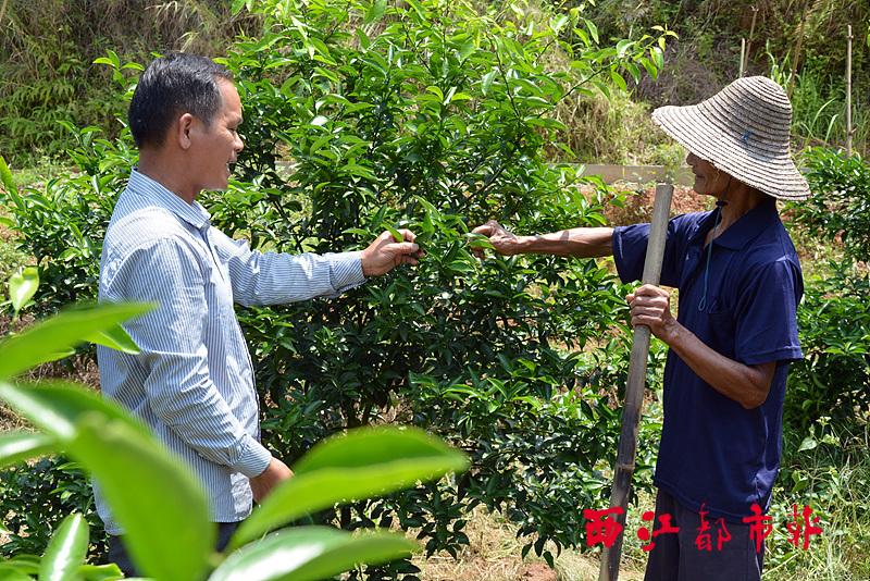 指导果农防治果树病虫害