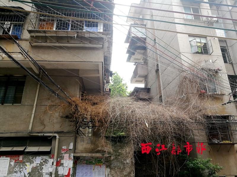 近日,有市民向本报反映,步埠路一级一棵树木枯死,大量枯枝挂在电线和