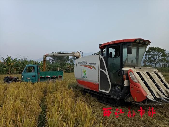 机械化收割提高晚稻收割效率