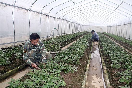 该县注重调整农业产业结构